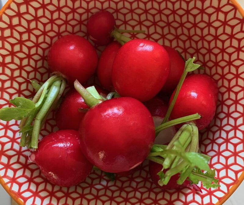 Rzodkiewkowe tulipanki